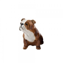 Bulldog anglais-1